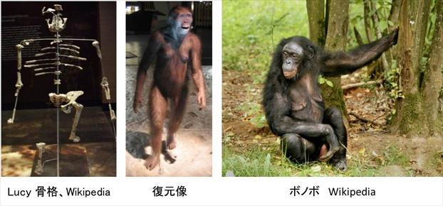 chukangata_kaseki_1.jpg