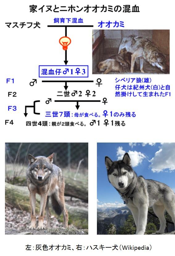 hazah-26_3_2.jpg