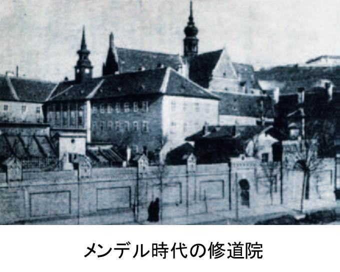 http://andowako.jp/contents/contents/image/mendel_3.jpg