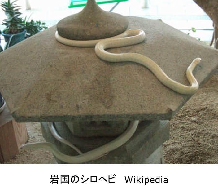 moromoro_shinkou_9.jpg