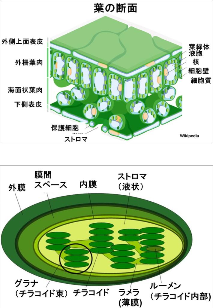 plant_feeds_animal_8_9.jpg
