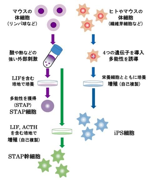 stap_2_1.jpg