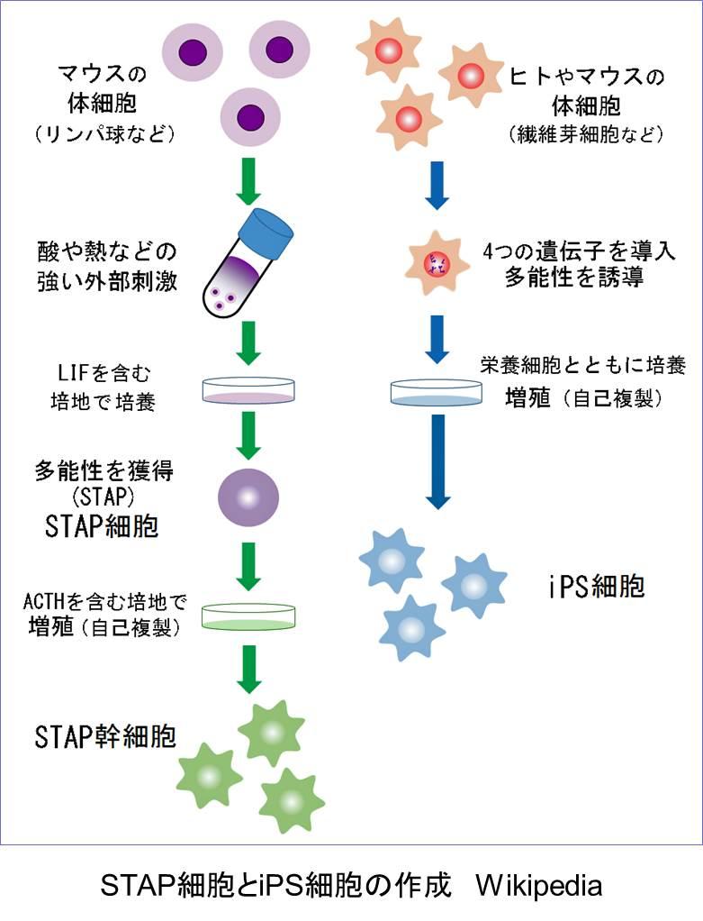 stap_5.jpg